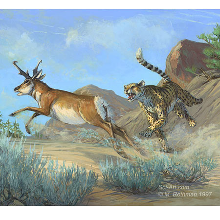 Extinct North American Cheetah and Pronghorn