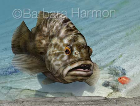 Gag Grouper