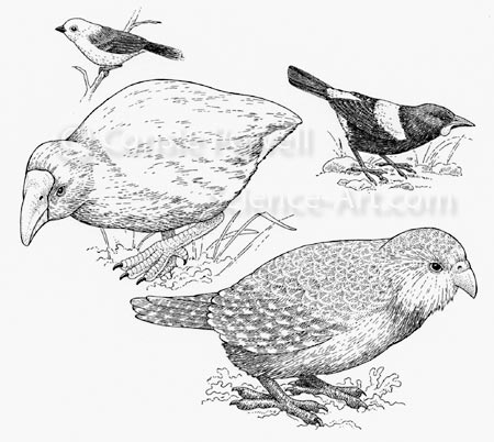 Endemic New Zealand Birds