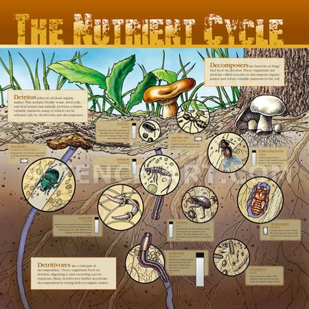 Nutrient Cycle - Decomposers and Detritivores