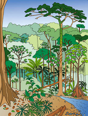 Brazilian Rain Forest Activity Sheet