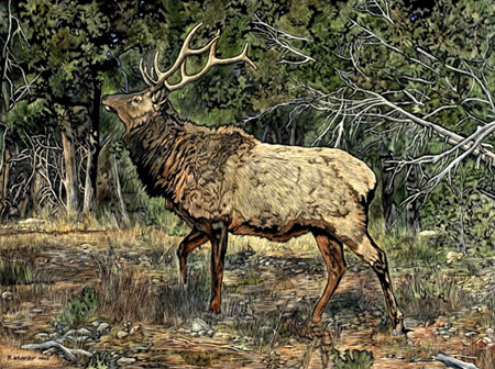 """Grand Canyon Elk"""