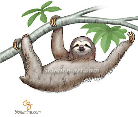 1000+ images about Sloth Birthday Cake?!?!?!?!? on ...