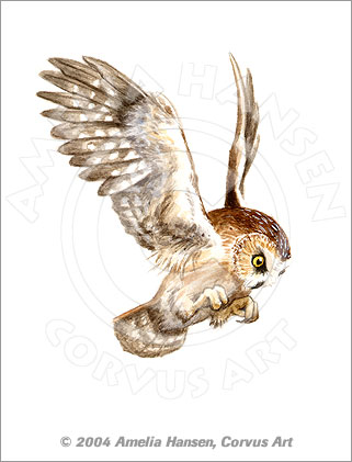 Pouncing Saw-whet Owl