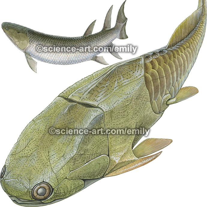 Devonian Placoderm and Eusthenopteron foordi