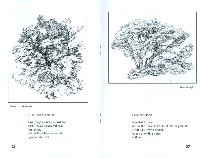 Tree Sketches - a chapbook of poetry and art