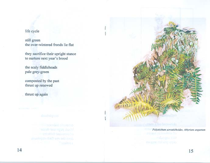 Seed Pods a chapbook of poetry and art