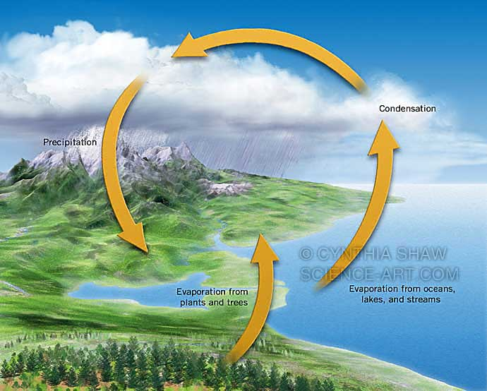 Water cycle, simplified