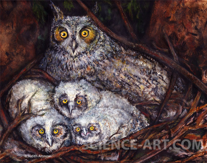 Long eared owl with babies in nest