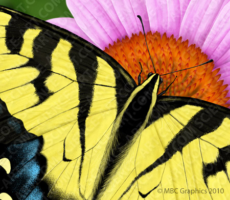 Eastern Tiger Swallowtail - Detail