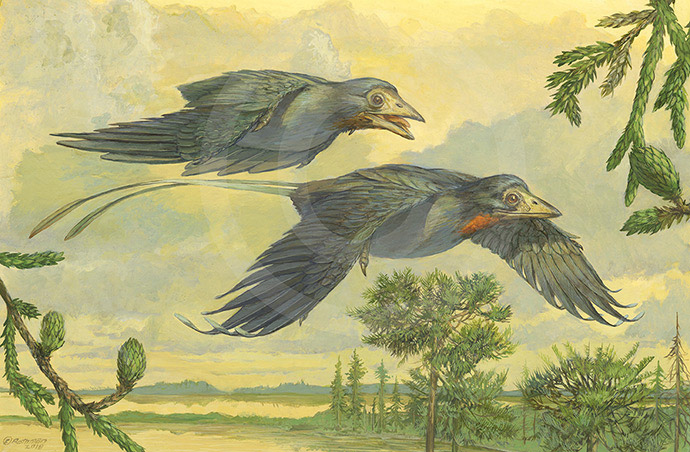 Eoconfuciousornis zhengi pair in level flight