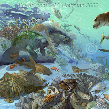 Florida Pleistocene Marine Habitat left side