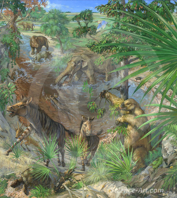 Florida Miocene Habitat (center detail)
