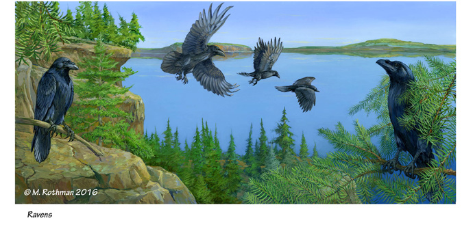 Raven group Northwestern Ontario