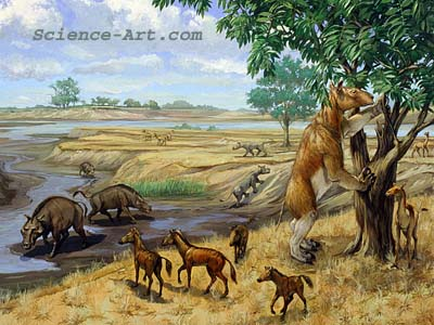 North American Miocene Era Habitat Group
