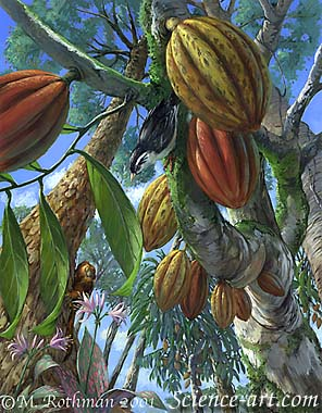 Cacao in the Brazilian Atlantic Forest