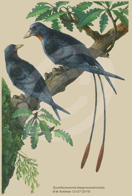 Eoconfuciousornis zhengi male and female pair