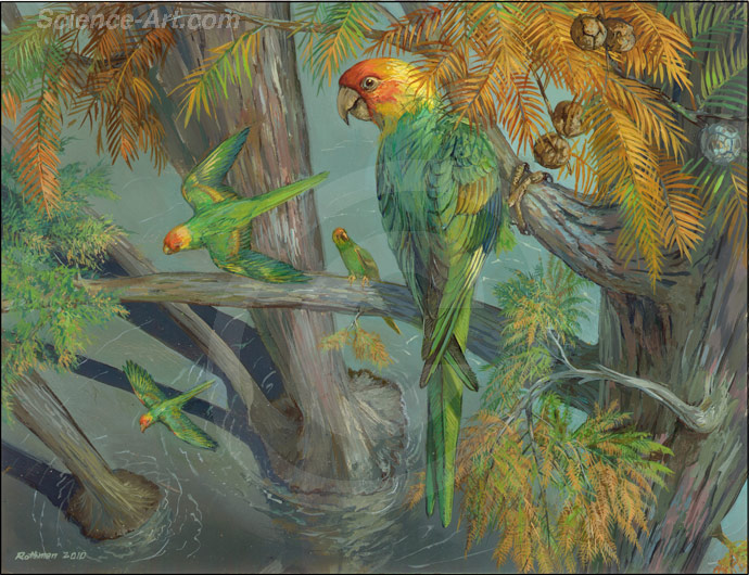 Extinct Carolina parakeet habitat group