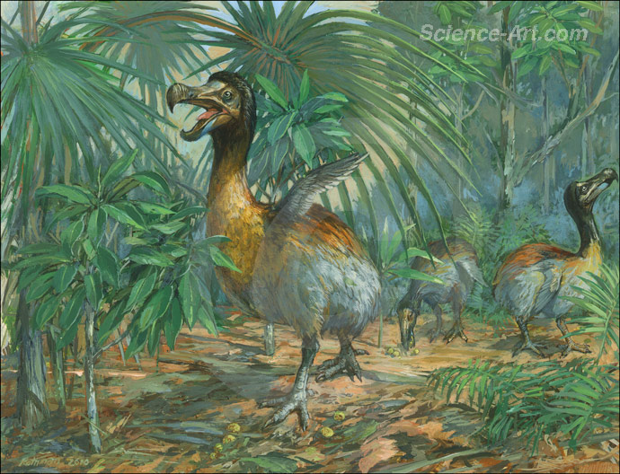 Extinct Dodo Mauritius Island habitat group