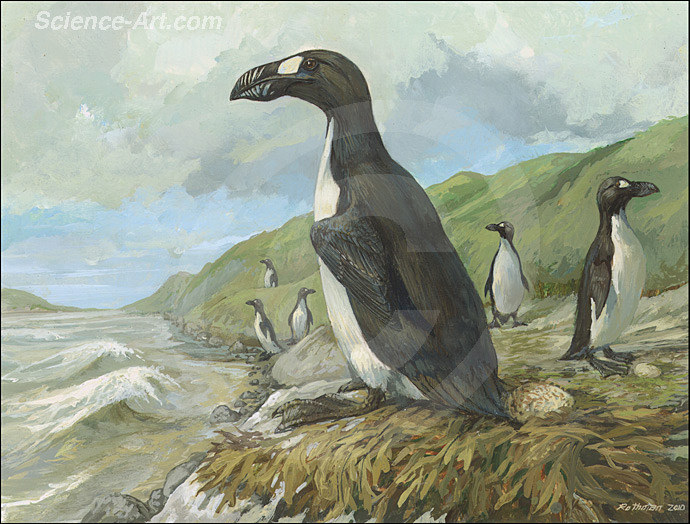 Extinct Great Auk at the Gulf of St. Lawrence