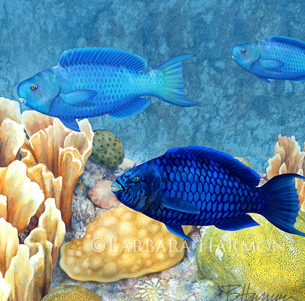 Parrotfish and Corals at Reef Crest