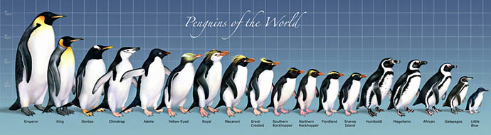 Penguins of the World Mural and Print