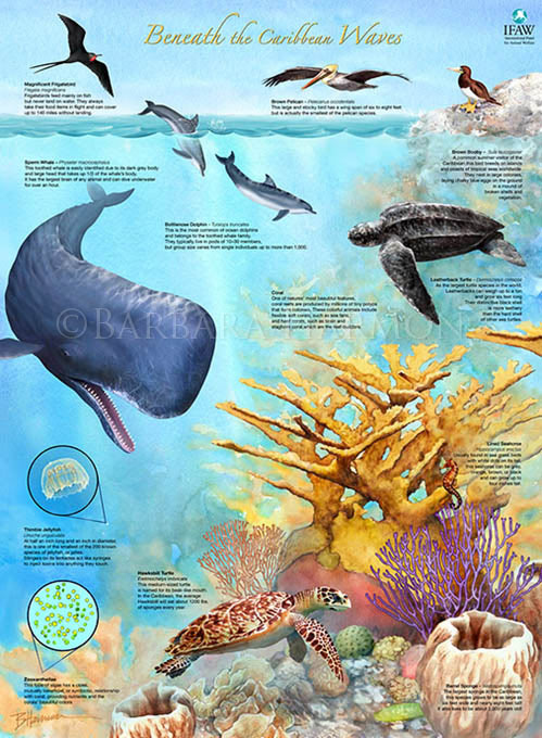 Caribbean Ecosystem Poster
