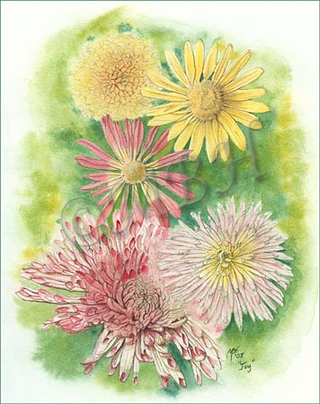 Chrysanthemum study