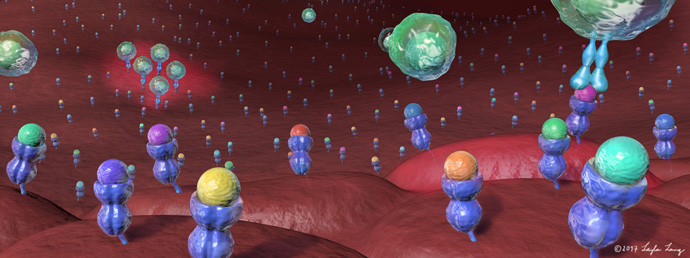 Cellular Landscape of the Immuno-Peptidome
