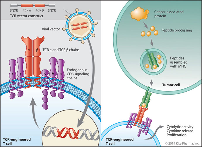 Autologous Cell Therapy