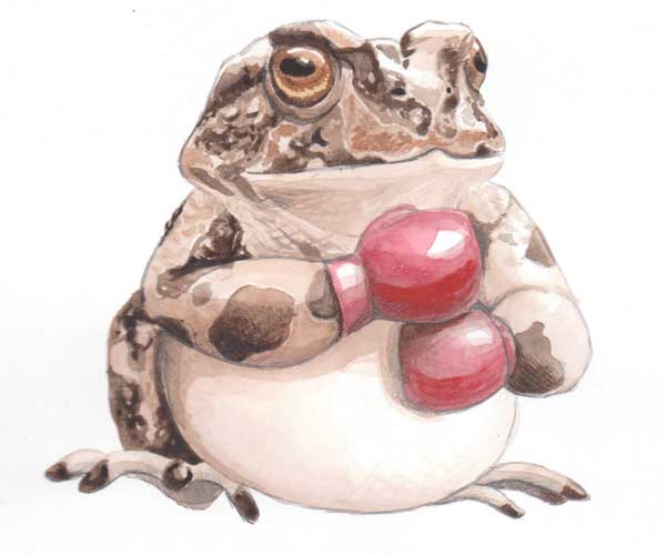 Fighting for Survival (Yosemite toad)