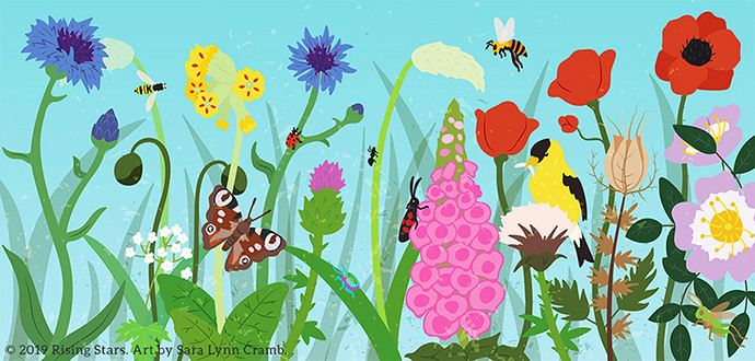 wildflowers and pollinators