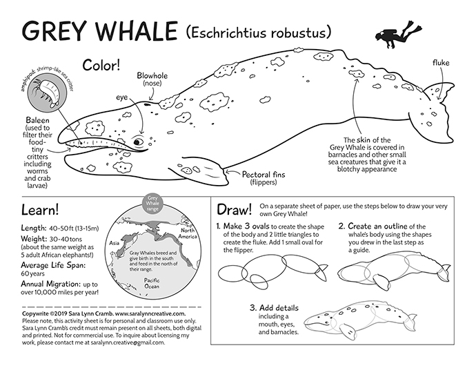 Grey Whale Activity Page