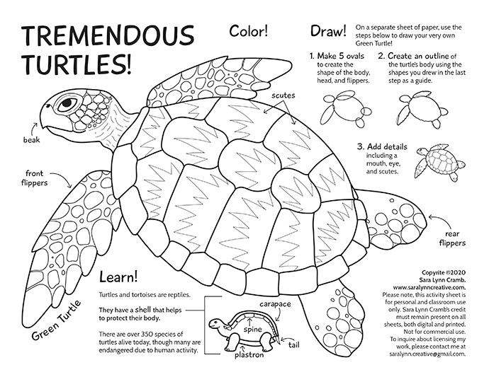 Tremendous Turtles Activity Page