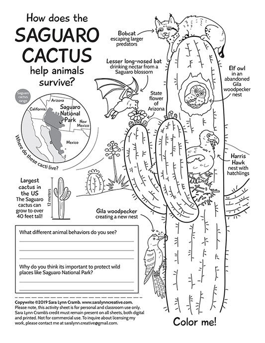 Saguaro Cactus Activity Page