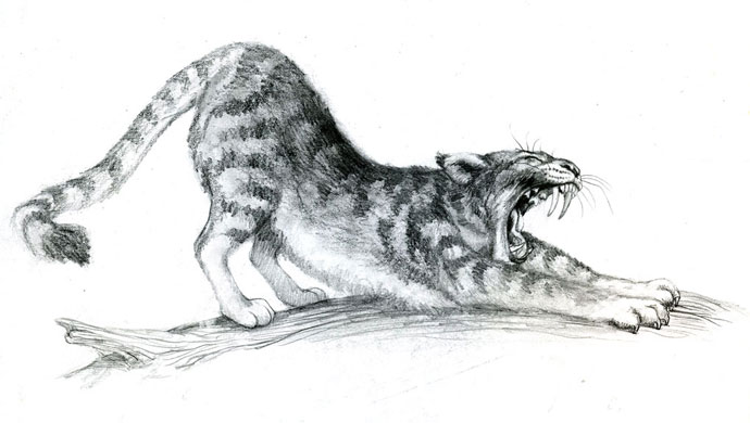 Sabertooth cat stretching