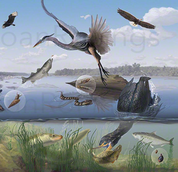 Flora and Fauna of the Susquehanna River