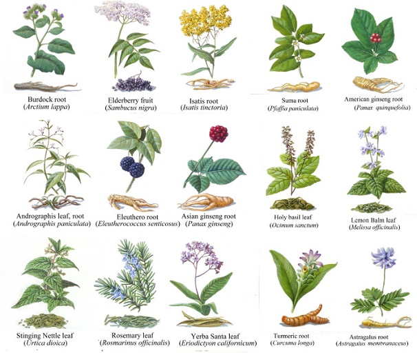 Various Herbs Used in Traditional Medicine I
