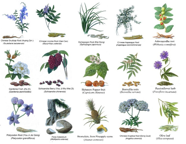 Various Herbs Used in Traditional Medicine 3