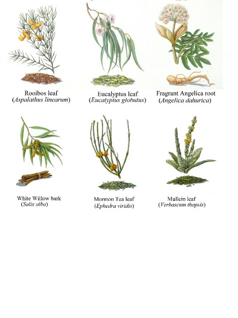 Various Herbs Used in Traditional Medicine IV