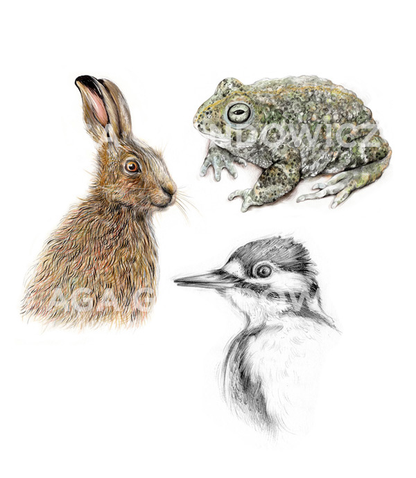 Hare, Toad, Woodpecker