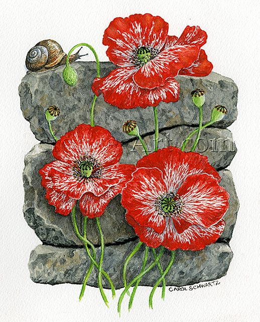 Poppies and Snail