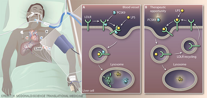 Therapeutic opportunity in sepsis
