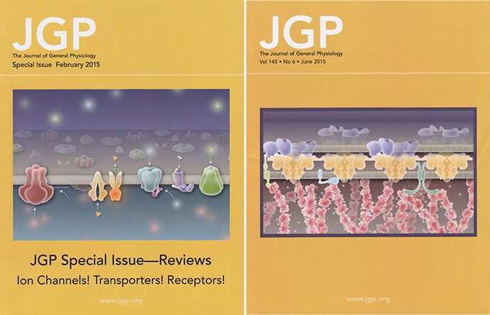 Cover illustrations created for JGP
