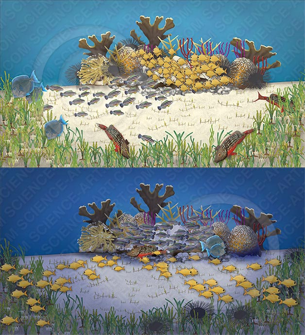 Caribbean patch reef by day and night