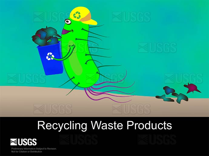 Bacteria recycle waste products