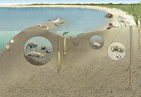 Atlantic Seashore Ecosystem
