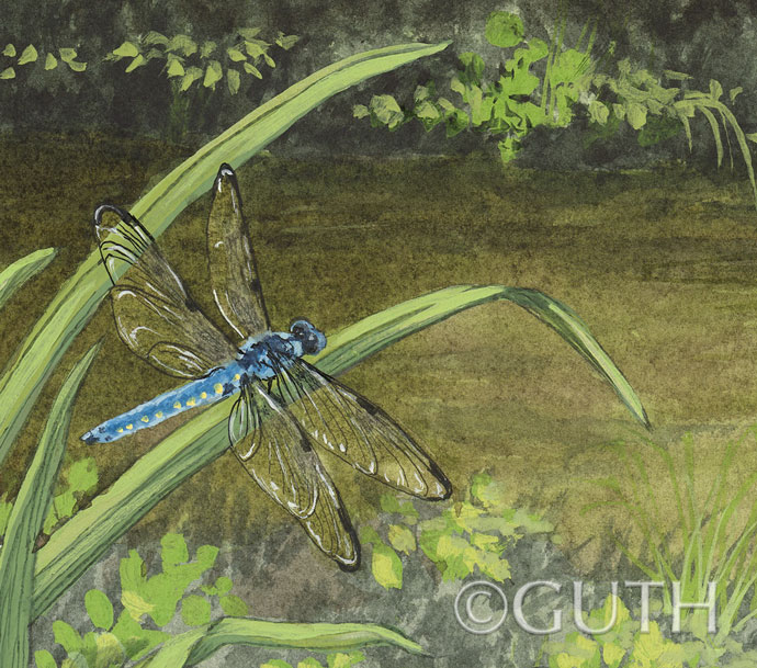 Detail: Great Blue Skimmer Dragonfly