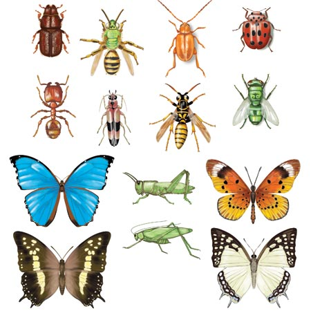 Insects! Assorted spot art illustrations
