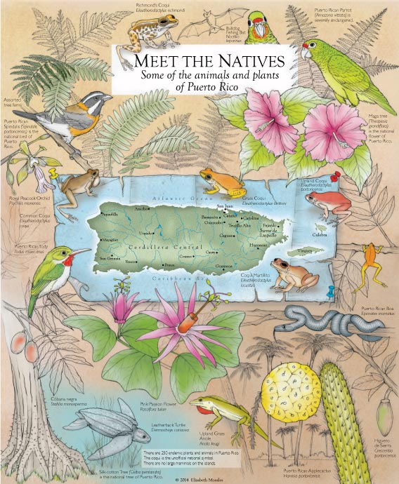 Meet the Natives